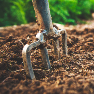 Read more about the article 'Tune your fork' – a moon planting guide