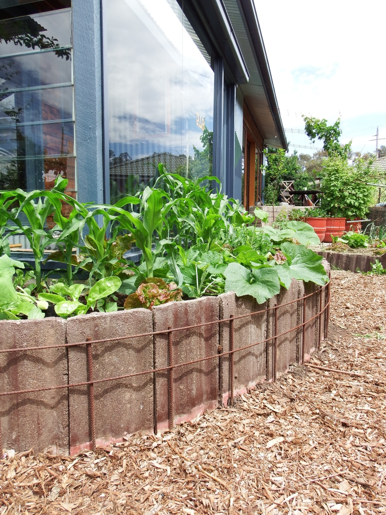 Concrete roof tiles used with reo to make a curved raised garden bed. Soil from the surrounding path is used to build the bed. The recessed path is filled with thick mulch and acts as a infiltration basin to store water, which wick up into the garden bed.