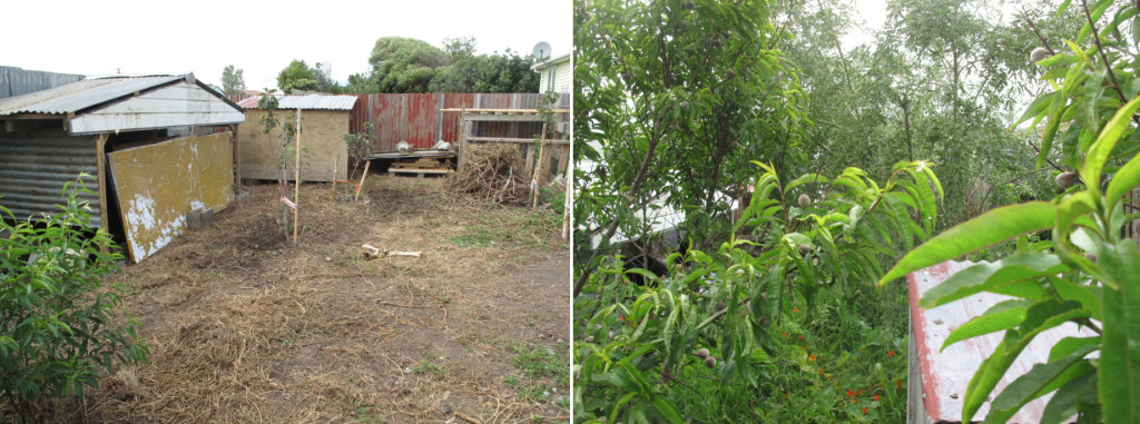 Transformation of a barren backyard into a productive perennial food system