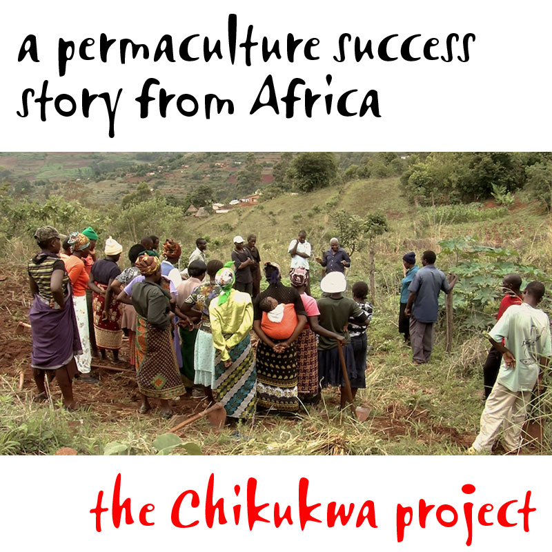 A permaculture success story from Africa. The Chikukwa Project.