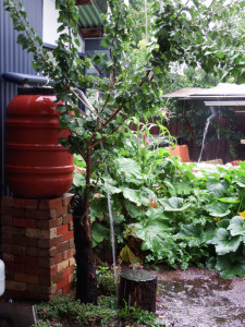 AH rainwater barrel overflowing