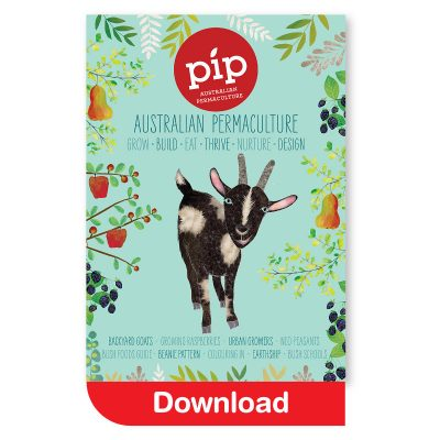 Pip Issue #8 - Download